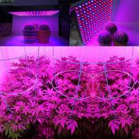 Wholesale 1000 Watt RED Led Grow Lamp For Cannabis And Marijuana , Aluminum Body from china suppliers