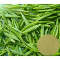 Quality Green Tea Extract(Polyphenol 98%,Catechins 80%,EGCG 70%,Caffeine 0.5%) for sale