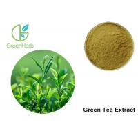 Wholesale Green Tea Leaf Extract Treating Measles , 30% Polyphenols Powder from china suppliers