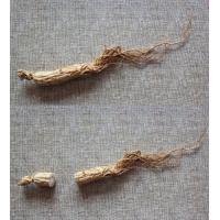 Wholesale natural herbal medicinal edible plant TCMs Chinese ginseng wild ginseng wholesale from china suppliers