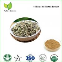 China tribulus extract,tribulus terrestris extract powder,tribulus terrestris 90% saponins on sale