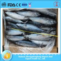 Buy cheap Best Quality of Cheap Frozen Seafoood Whole Round Bonito Fish for Sale. from wholesalers