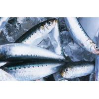 Wholesale High Quality Whole Frozen Fish Round Sardine For Market With 4-6pcs/kg Size . from china suppliers