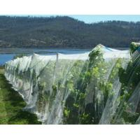 Wholesale Anti-hail HDPE Agricultural Netting from china suppliers