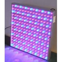 Wholesale high intensity red blue yellow 50W 300MA led plant growing lights 85 - 264V for hydroponic from china suppliers