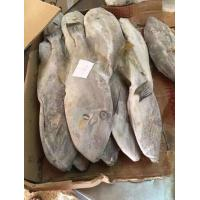 Wholesale Good Quality Seafood Frozen Skipjack Fish Supplier with All Size for Marketing. from china suppliers