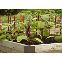 Wholesale Decorative Eggplant Metal Garden Trellis , Trellis Plant Support  For  Eggplant from china suppliers