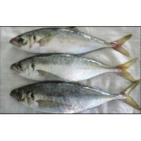 Wholesale Wholesale Frozen Blue Round Scad Fish Decapterus Maruadsi on sale. from china suppliers
