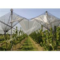 Wholesale UV Stabilized Agriculture Anti-hail Net with Mesh Size 3mm x 7mm 55g Per Square Meter from china suppliers