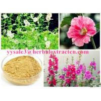 Wholesale Chinese manufacturer supply  Althaea Officinalis Root Extract with competitive price, ISO Certified, 100% natural from china suppliers