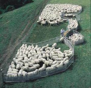 Wholesale sheep panel,sheep gate,sheep yard from china suppliers