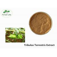 China Herba P.E. Tribulus Terrestris Extract 90% Saponins Powder for Sex Enhancement on sale