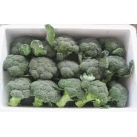 Wholesale High Protein Natural Green / White Iqf Organic Frozen Broccoli 9 - 13cm, Full of nutrients from china suppliers