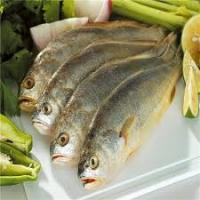 Wholesale new catching high demand from foreign market for frozen yellow croaker. from china suppliers