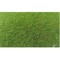 Wholesale Residential Artificial Grass Synthetic Turf Carpet Lawn Mat from china suppliers