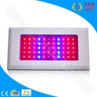 Wholesale 55*3W LED Grow Light for Flowers, Garden, Greenhouse, Fruits from china suppliers