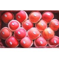Wholesale Yantai Delicious Thick Fresh Fuji Apple from china suppliers