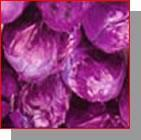Wholesale Cabbage Red Color from china suppliers