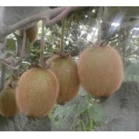 Buy cheap organickiwifruit from wholesalers