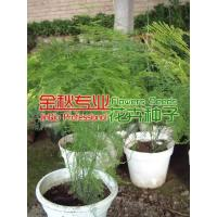 Wholesale Foliage & Gout grass from china suppliers