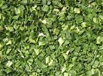 Wholesale AD hot air drying dehydrated vegetablesShallot Flakes from china suppliers
