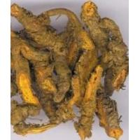 Wholesale More.. Berberine from china suppliers
