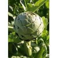 Buy cheap Artichoke Extract Powder from wholesalers