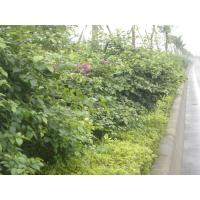 Wholesale Landscaping from china suppliers