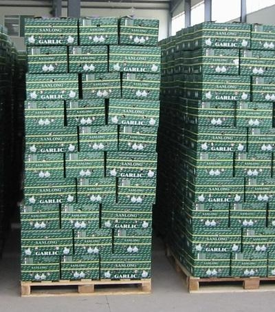 Quality garlic in pallet for sale
