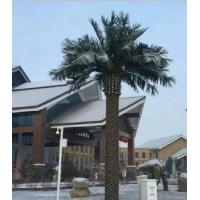 Wholesale Date Palm Tree from china suppliers