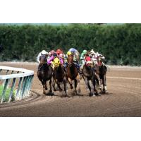 Wholesale Jockeys Riding Horses Wallpaper for Android, iPhone and iPad from china suppliers