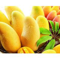 Wholesale Plant Extract African Mango Seed Extract from china suppliers