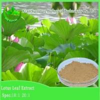 Weight Loss Lotus Leaf Extract