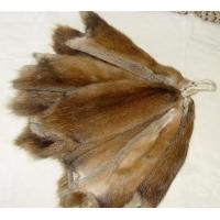 Wholesale bisam: Muskrat-Musquash skins pelts plate from china suppliers
