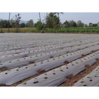 Wholesale Silver & black Mulching Film from china suppliers