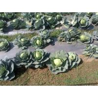 Wholesale Mulching Film For Vegetable from china suppliers