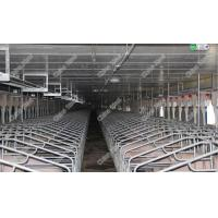 Hot-dip galvanized pig gestation stall