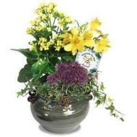 Wholesale Corporate Gifts Arrangement of Blooming Plants from china suppliers