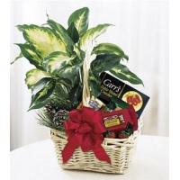 Wholesale Holiday Hospitality Basket - B8-3730 from china suppliers