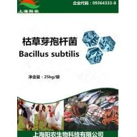 Wholesale Bacillus subtilis from china suppliers