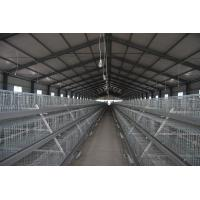 A Type Broiler Poutlry Cage System for Chicekn Farm
