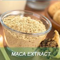 GMP Factory Hot Sale Men Sexual Health And Sex Medicines Product 100% natural Maca Root Extract