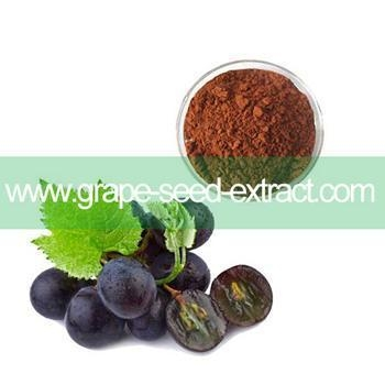 how to take grape seed extract powder
