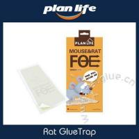 China Rat And Mouse Size Peanut Butter Scented Glue Trap Snake Glue Trap on sale