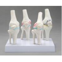 Wholesale JY/A3008 Knee Joints Synthesis Model from china suppliers
