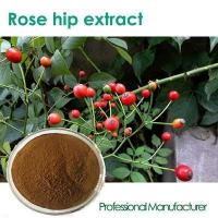 Wholesale fructus rosae extract Rose Hip Extract can antioxidant from china suppliers