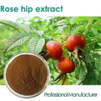 Wholesale Factory Rosehip Seed Oil,Rose Hips Seed Oil , Rose Hips Oil from china suppliers