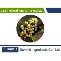 Wholesale Leatherleaf mahonia extract 10:1,mahonia,Mahonia bealei(Fort.) from china suppliers