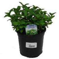 Wholesale Kitchen Garden 1L Herb from china suppliers