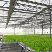 Wholesale Greenhouse NFT Hydroponic Growing System for Tomato and Lettuce from china suppliers